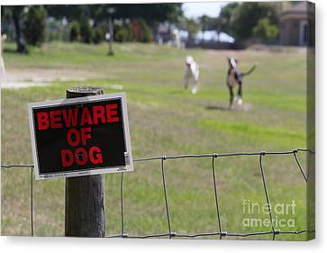 Beware Of Dogs Canvas Print