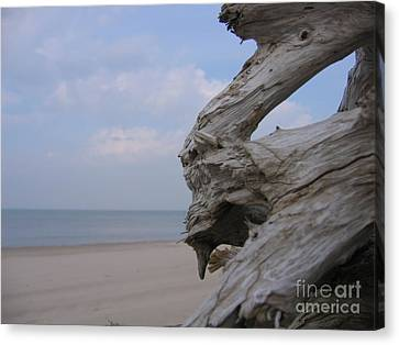 Canvas Print featuring the photograph Driftwood by Maciek Froncisz