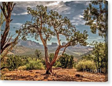Beyond The Juniper Canvas Print by Joseph Yvon Cote