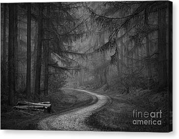 Beyond The Log Pile Canvas Print by Richard Thomas