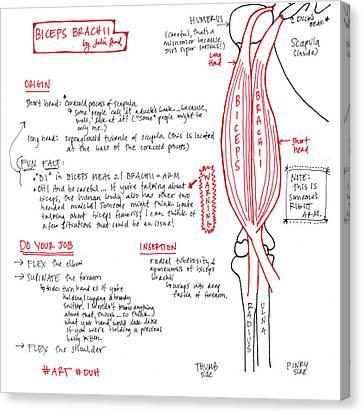Biceps Brachii Canvas Print