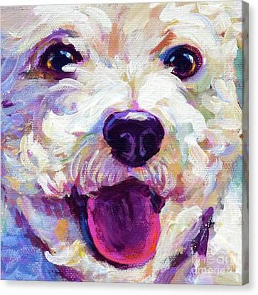 Bichon Frise Face Canvas Print by Robert Phelps