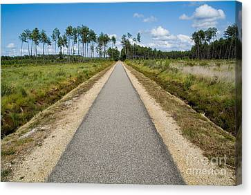 Bicycle Track Passing Through The Landes Forest Canvas Print by Sami Sarkis