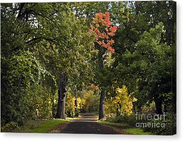 Bidwell Park By One Mile Canvas Print