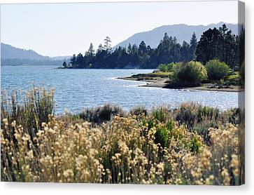 Big Bear Lake Shoreline Canvas Print