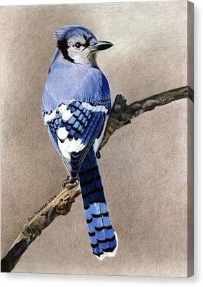 Canvas Print featuring the drawing Big Blue Jay by Ana Tirolese