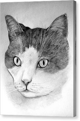 Canvas Print featuring the drawing Big Boy Baily by John Stuart Webbstock