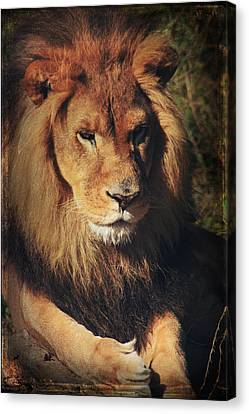 Big Boy Canvas Print by Laurie Search