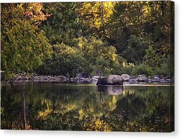 Big Bull In Buffalo National River Fall Color Canvas Print by Michael Dougherty