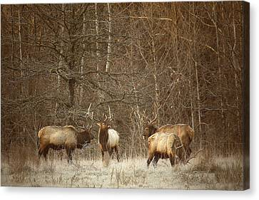 Canvas Print featuring the photograph Big Bull Meeting In Boxley Valley by Michael Dougherty