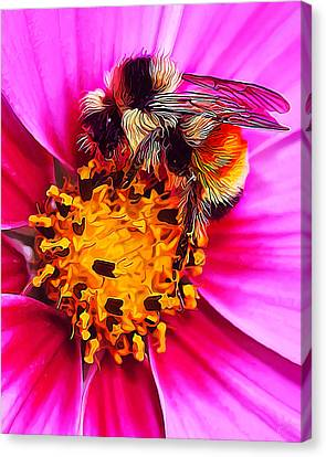 Big Bumble On Pink Canvas Print by ABeautifulSky Photography