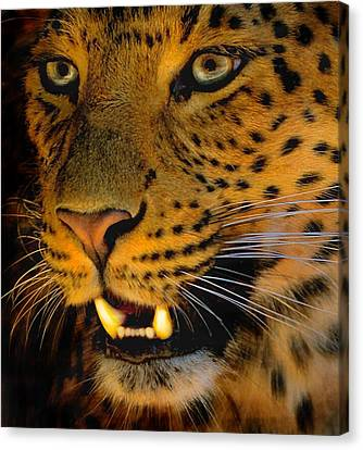 Canvas Print featuring the painting Big Cat by Louise Fahy