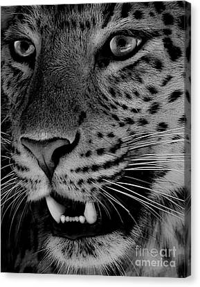Canvas Print featuring the painting Big Cat II by Louise Fahy