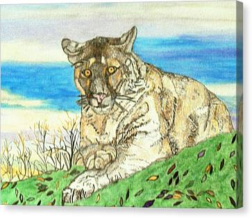 Big Cat Watching Out For Prey Canvas Print by Connie Valasco