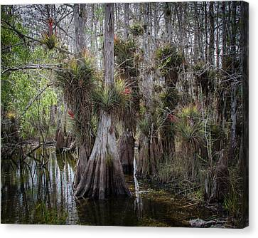 Big Cypress Preserve Canvas Print by Bill Martin