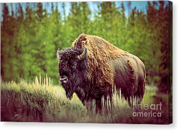 Bales Canvas Print - Big Daddy by Robert Bales