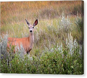 Big Ears Canvas Print by Marty Koch