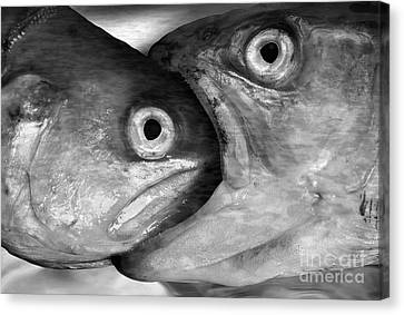 Big Fish Eat Small Fish Canvas Print by Michal Boubin
