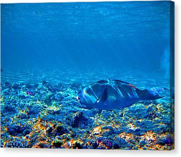 Big Fish. Underwater World. Canvas Print by Andy Za
