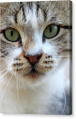 Canvas Print featuring the photograph Big Green Eyes by Munir Alawi