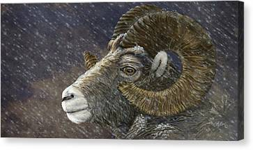 Big Horn In Snowstorm Canvas Print by Kathie Miller