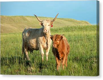 Big Horn, Little Horn Canvas Print by Todd Klassy