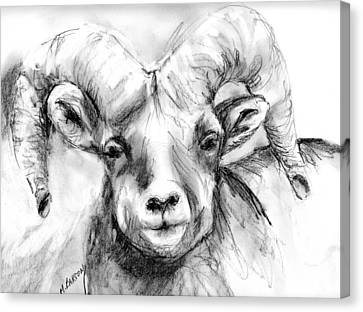 Canvas Print featuring the drawing Big Horn Sheep by Marilyn Barton