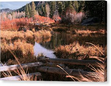 Big Meadow Creek Fall Canvas Print by Larry Darnell