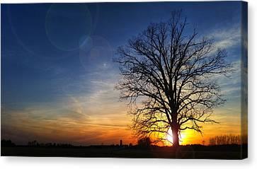 Big Oak Splendor Canvas Print