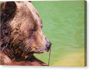 Big Old Bear With A Tiny Stick Canvas Print by Karol Livote
