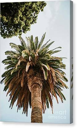 Botanical Beach Canvas Print - Big Palm Tree by Viktor Pravdica