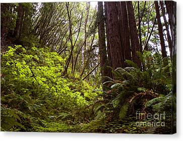 Canvas Print featuring the photograph Big Sur Red Woods by Gary Brandes
