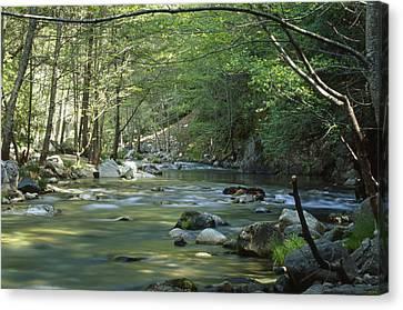 Big Sur River Canvas Print