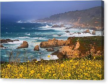 Big Sur Spring Beauty Canvas Print by Donna Kennedy