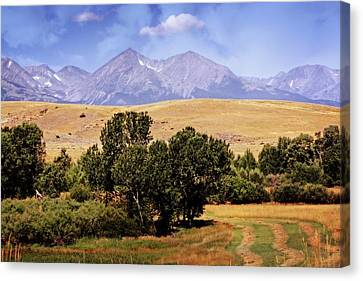 Big Timber Canyon 2 Canvas Print by Marty Koch