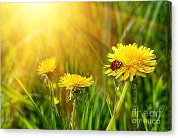 Big Yellow Dandelions In The Tall Grass Canvas Print by Sandra Cunningham