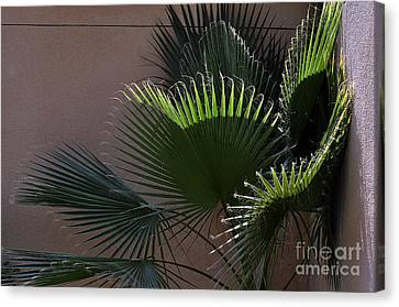 Biggest Fans Canvas Print by Clayton Bruster