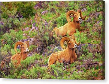 Bighorn Impressions Canvas Print by Greg Norrell