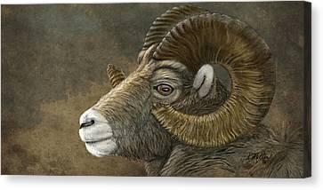 Bighorn Canvas Print by Kathie Miller