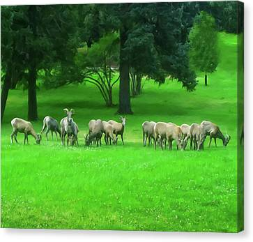 Canvas Print featuring the digital art Bighorn Sheep Ewes  by Chris Flees