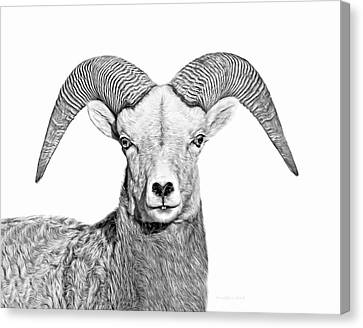 Canvas Print featuring the photograph Bighorn Sheep Ram Black And White by Jennie Marie Schell