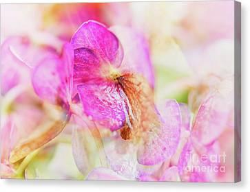 Bigleaf Hydrangea Abstract Canvas Print