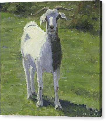 Billy Goat Canvas Print by John Reynolds