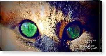 Bink Eyes Canvas Print by Donna Bentley