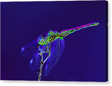 Bioluminescent Dragonfly Canvas Print by Richard Patmore