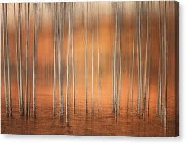 Birch Abstract Canvas Print by Naman Imagery