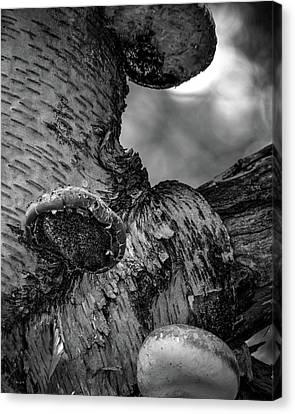 Canvas Print - Birch And Mushrooms by Bob Orsillo