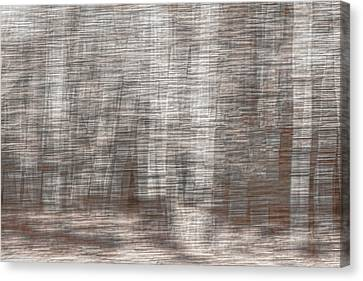 Canvas Print featuring the photograph Birch At The Forest Edge by Thomas Young