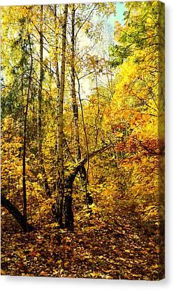 Birch Autumn Canvas Print by Henryk Gorecki
