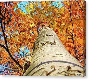 Birch Beauty Canvas Print